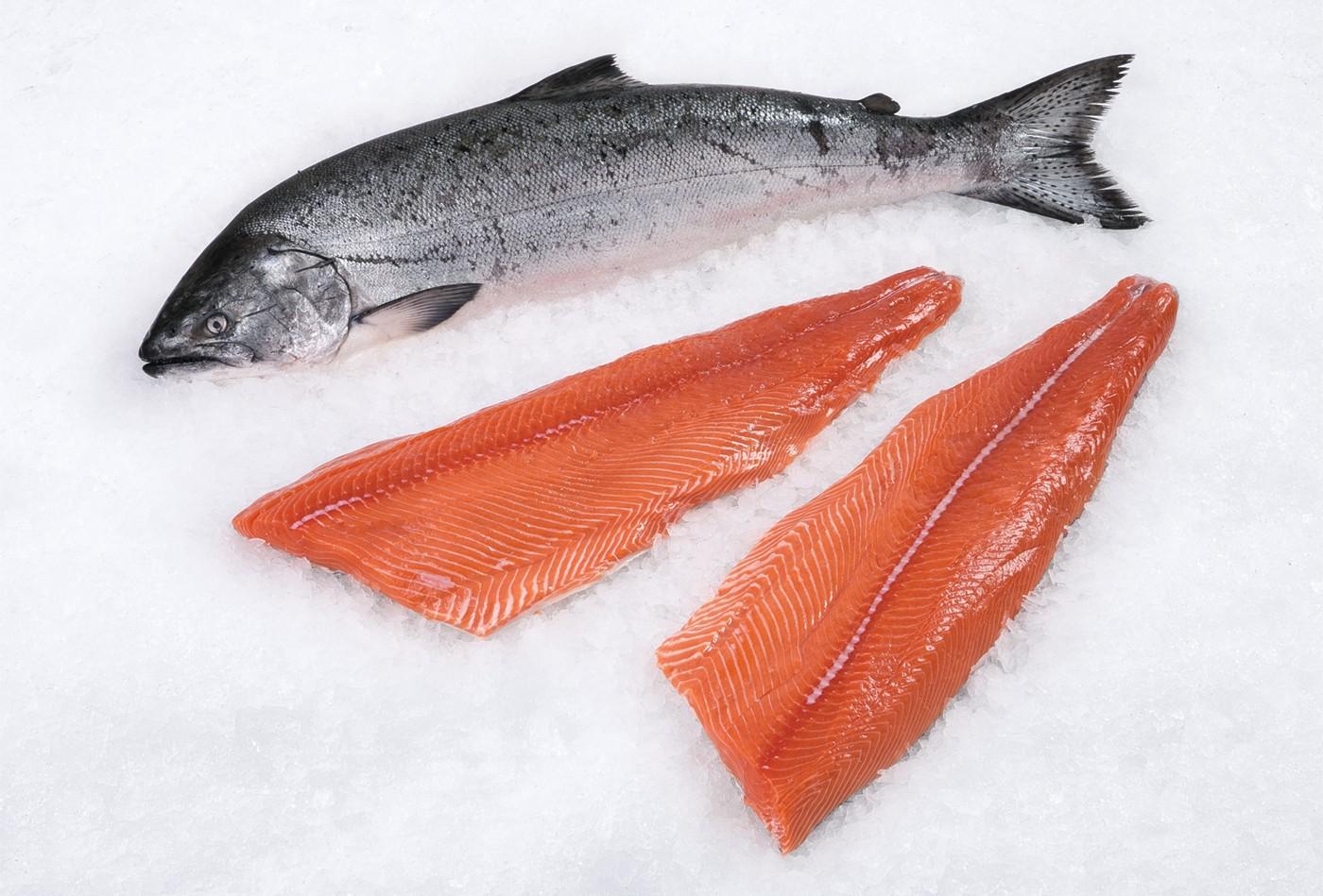 گرانترین ماهی های دنیا برای سرو کردن