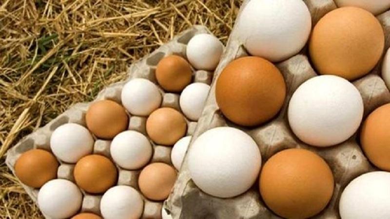 باورهای نادرست رایج درباره تخم مرغ