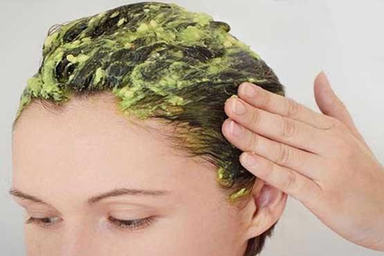 معجزه برگ های کاری برای زیبایی پوست و مو