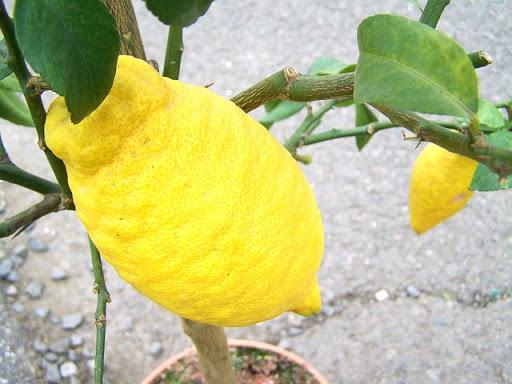 7 خاصیت باورنکردنی میوه بالنگ